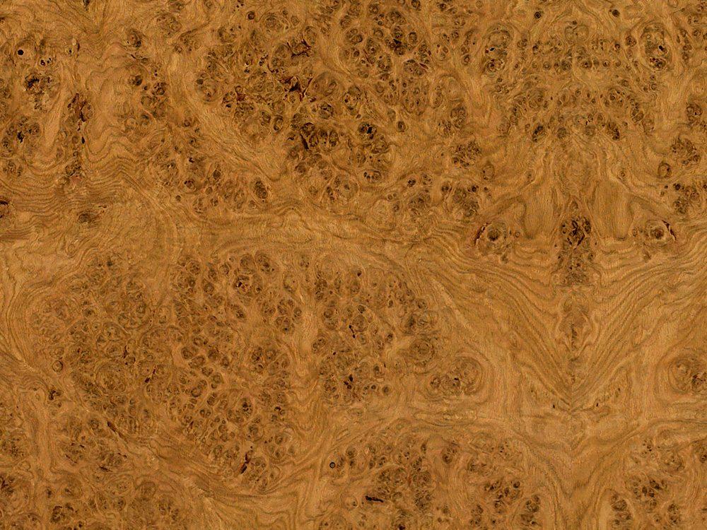 burr oak veneer